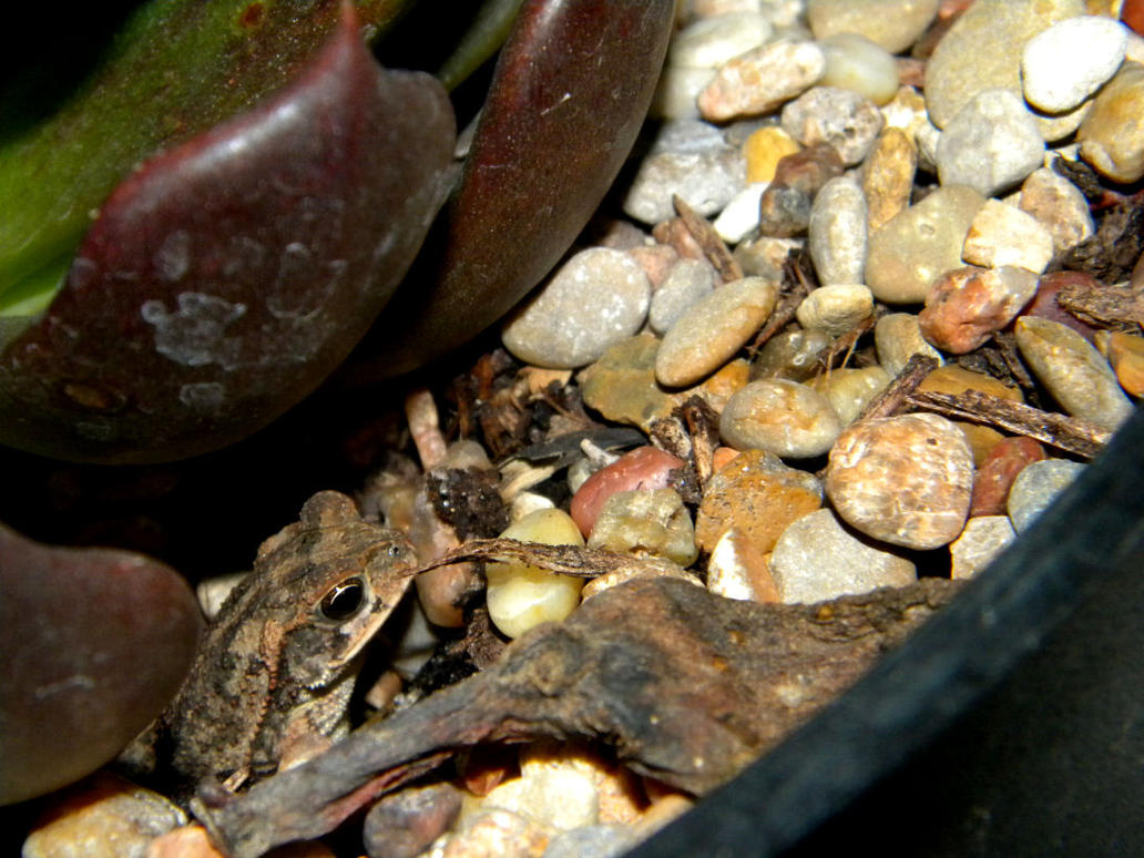 Tiny Toad by NatureRaven