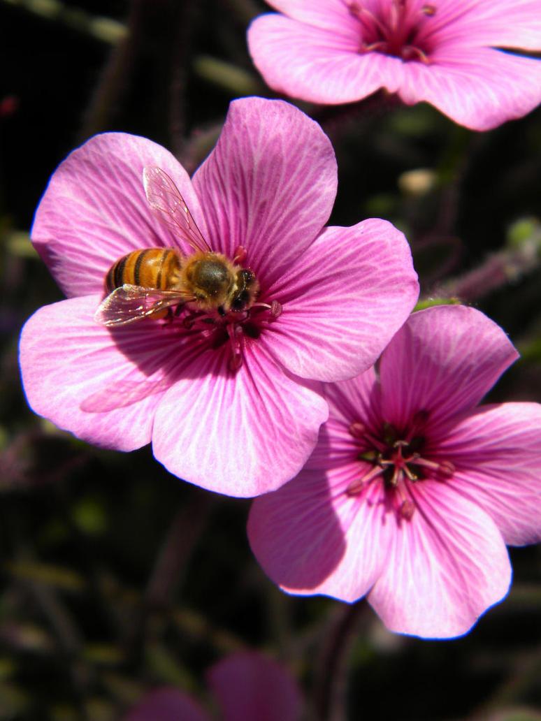 Birthday Bee by NatureRaven