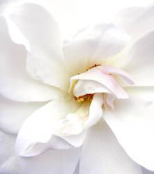 Love Is Lovelier by NatureRaven