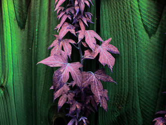 Violet Haze by NatureRaven