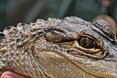 Crocodile by Bellax20yp