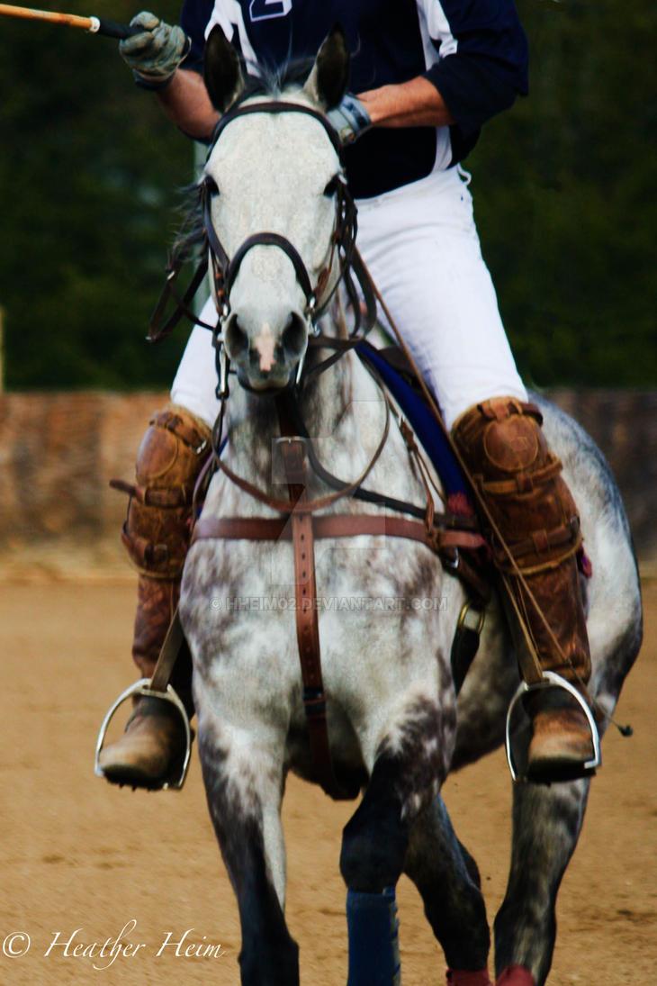 Polo Horse by HHeim02