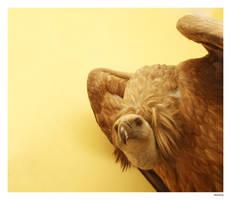 Vulture Gallery by Bueshang