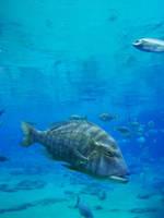 Underwater 01 by Bueshang