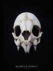 Vampire Bat Skull Mask - Top Half by Bueshang