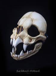 Vampire Bat Skull Mask - Full by Bueshang