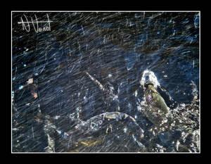 Snow Fish