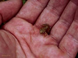Frog by Derangeoramus
