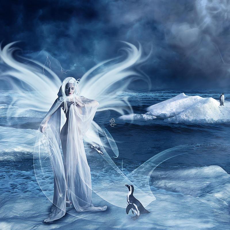 Reine des pingouins by Le-Meridian