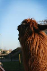 Furry Lama by NightNurse01
