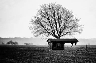 Uncle Tom's Cabin by cahilus