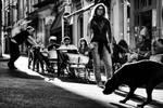 Strong Sun Black Dog