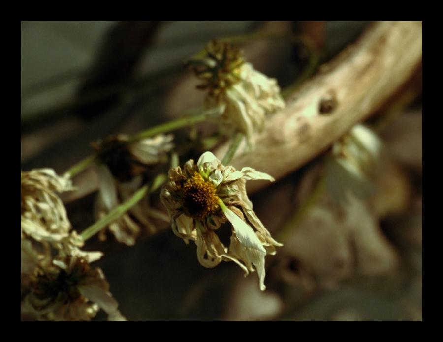 Botanical by Negeri
