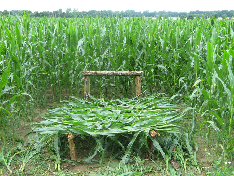 Ein bett im corn feld by boreasanemos on deviantart for Bett englisch