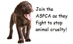 ASPCA-dog by FFStudioZ