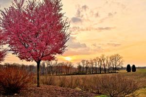 Spring Blooms by trmercier
