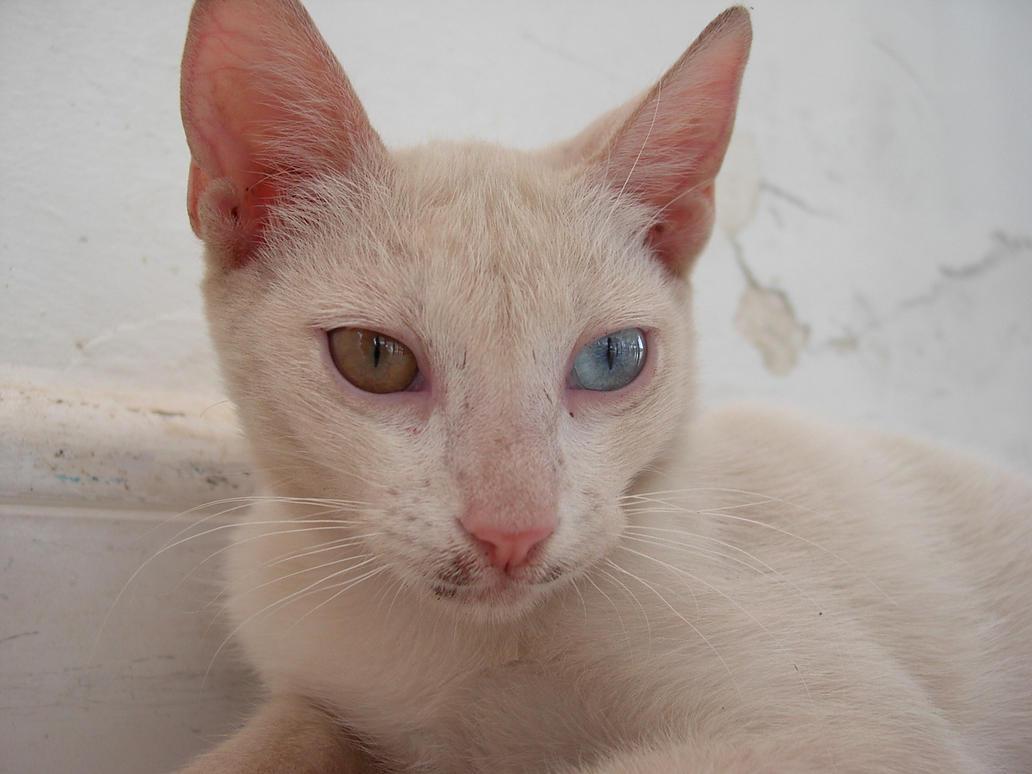 Cool Cat Est Une Une Entreprise N Ef Bf Bderlandaise Traduction