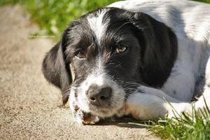 white-black doggie by Tigina