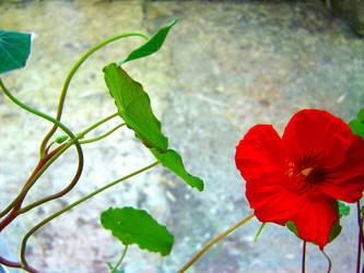 In Bloom by dutchess-n