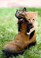 Kitties in a boot by BlazingElysium