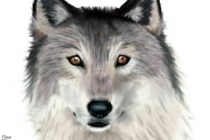 Wolf- Edited by Elana-Louise