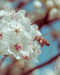 X-Bee