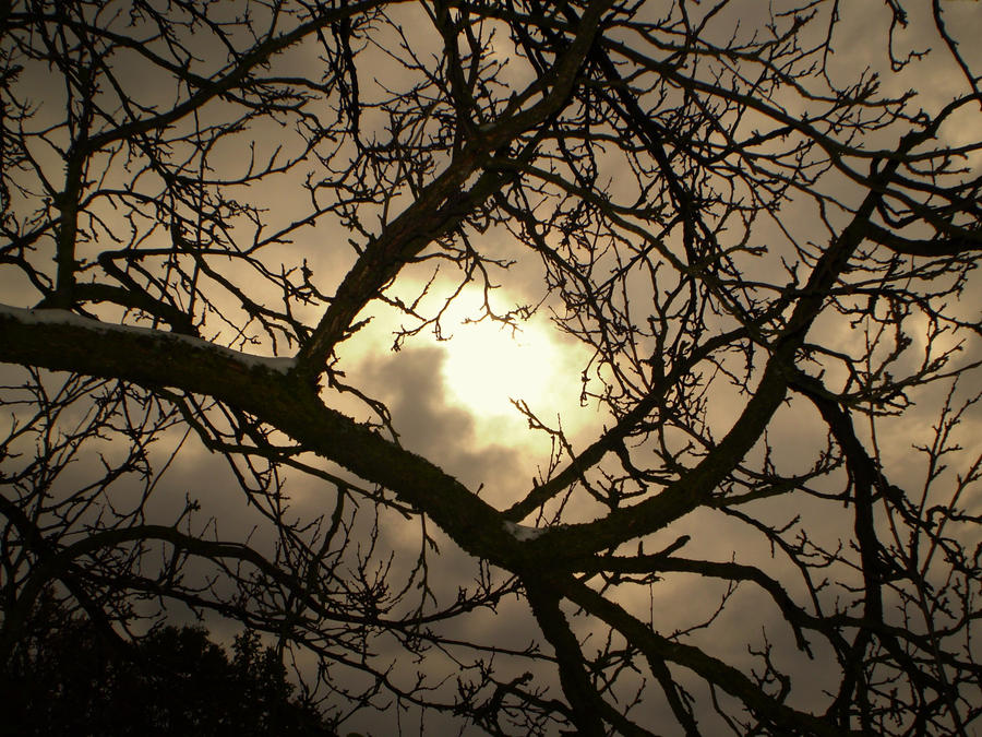 Tree branches and sun by Nicollaos