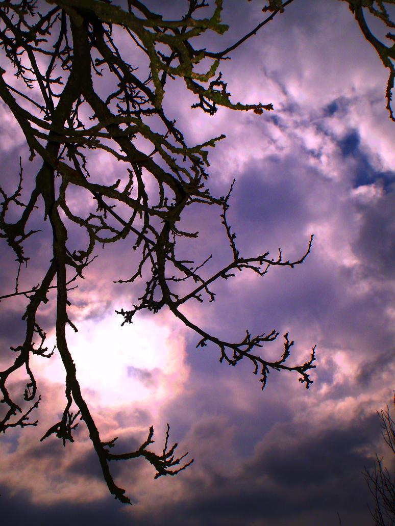 Purple sky by Nicollaos