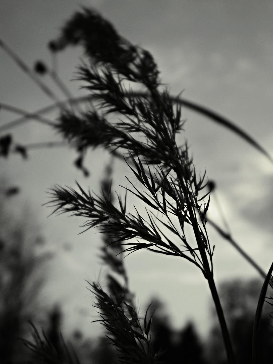 Blades of grass by Nicollaos