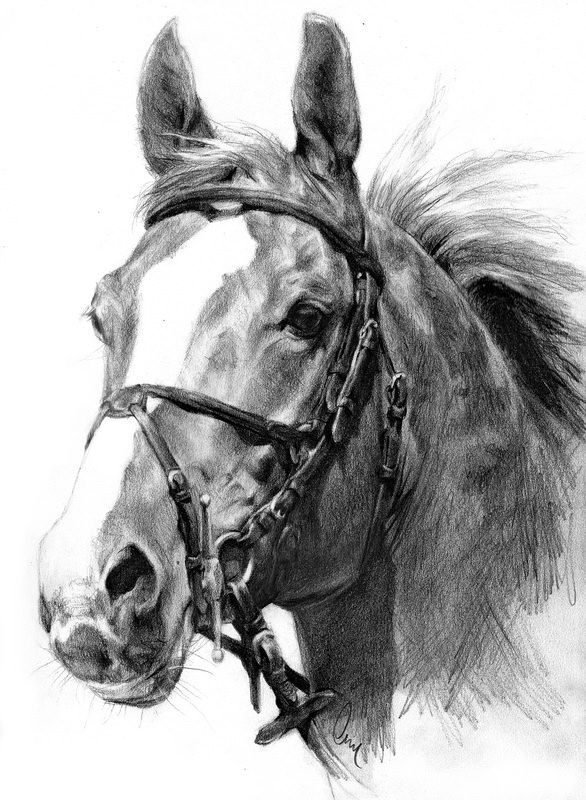 MUSTANG HORSE Pencil Drawing Art Print Signed by Artist DJ  |Horse Art Drawings