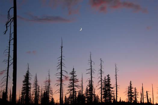 A High Desert Evening