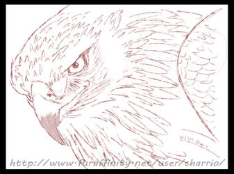 Avian Practice, Eagle by charrio