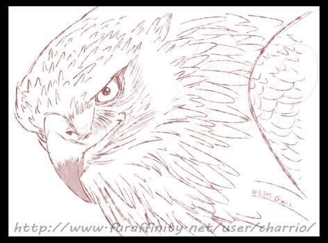 Avian Practice, Eagle