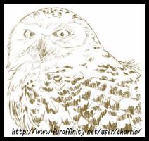 Avian Practice, Owl 02