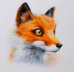Fox~  color pencils