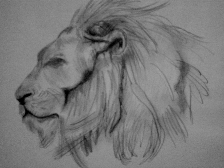 Easy Lion Pencil Drawing Pencil drawing of a li...