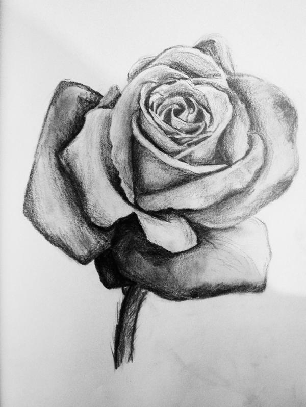 Rose sketch by j s s on deviantart for How to draw a black and white rose