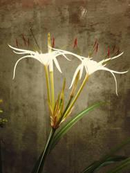 Morning flower by cactusvn