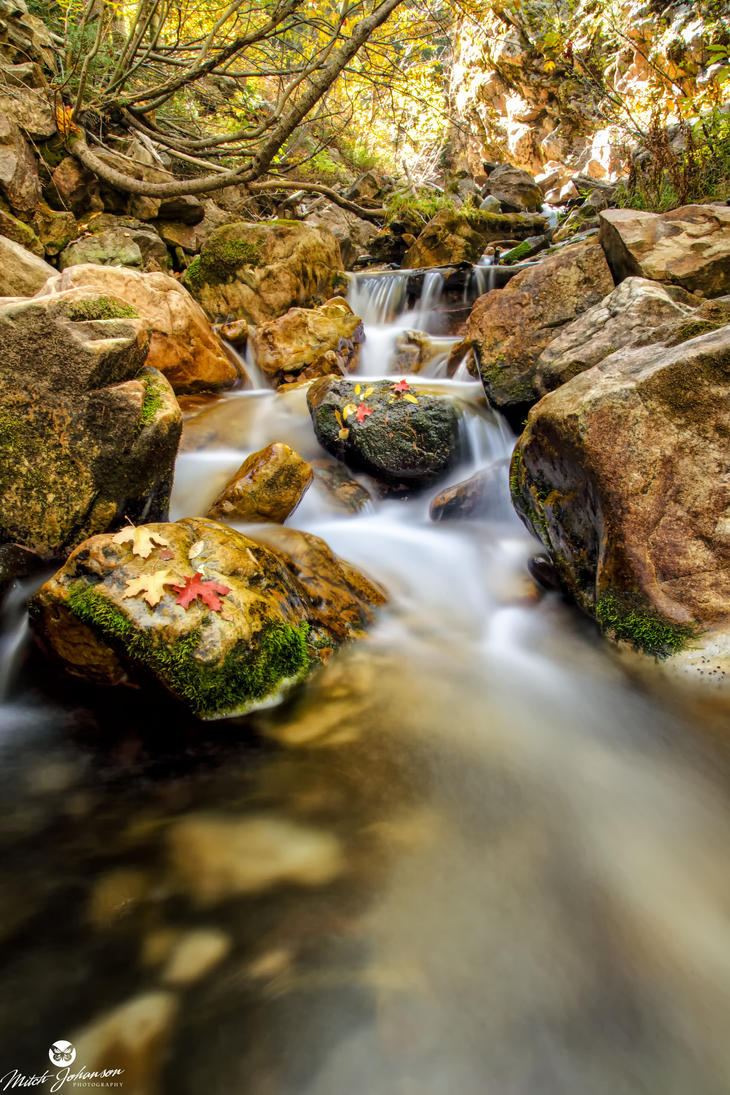 Leafs Resting on Rocks by mjohanson