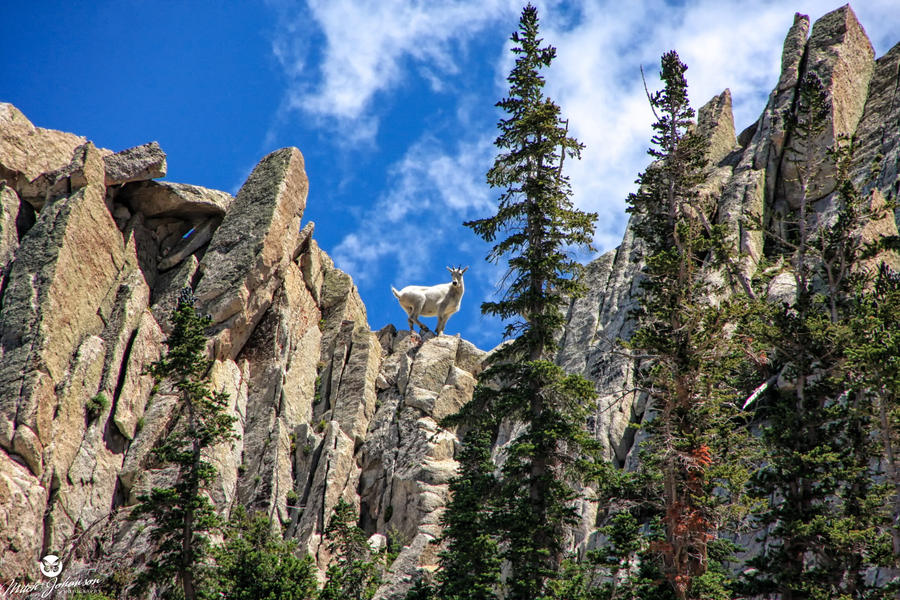 The Wondering Mountain Goat by mjohanson
