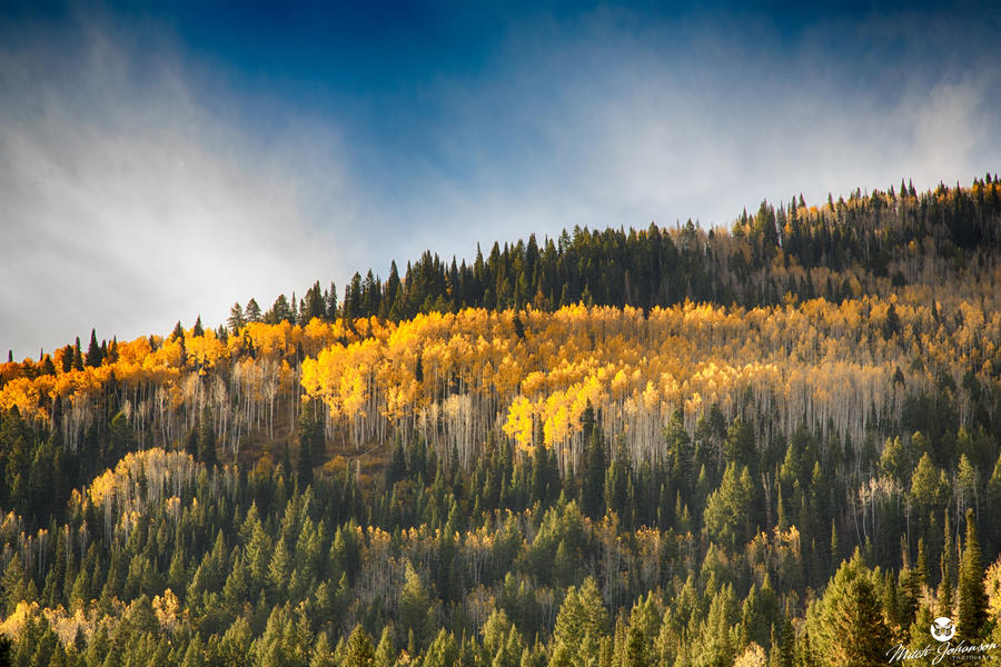 Gold Tips HDR by mjohanson