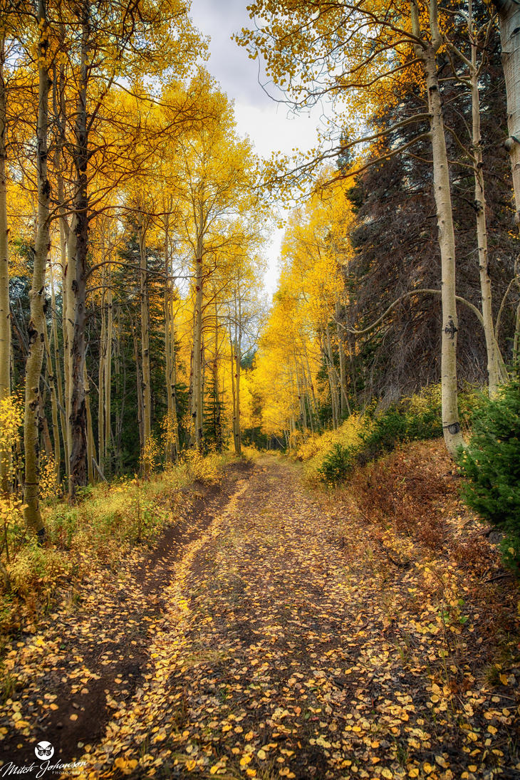 The Road Less Traveled by mjohanson