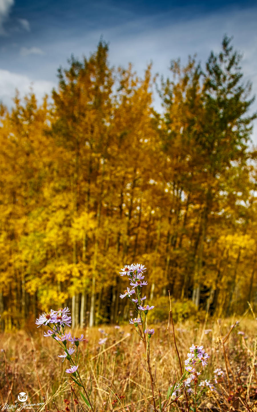 Flowers and Autumn by mjohanson
