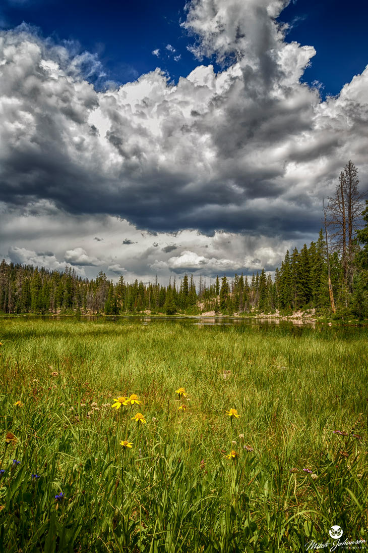 Yellow Flowers in the Mountain Meadow HDR by mjohanson