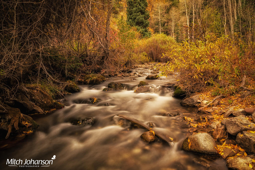 Losing Leaves on the River by mjohanson