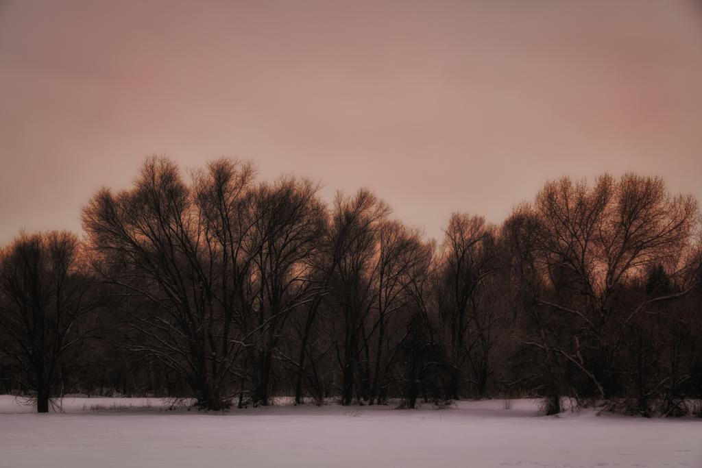 Cold Silhouetted Trees ORG by mjohanson