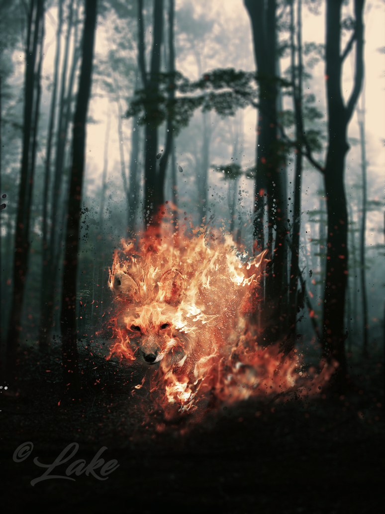 fire_fox_by_lake90-dce026w.png