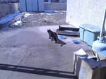 House panther outdoors 3