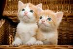 Kitten -1- by wojtar