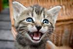 Kitten -2-